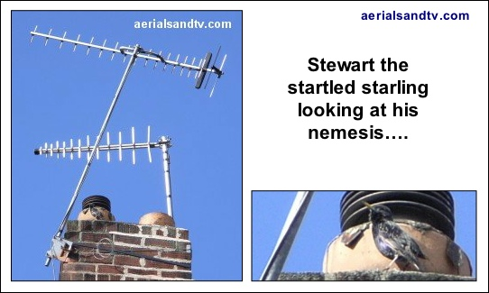 A six inch bracket isn't enough for Stewart the startled Sheffield starling either 542W L5