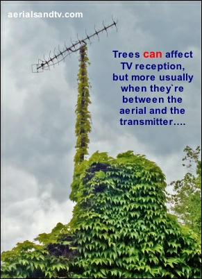 Trees CAN affect TV signals 402H L5